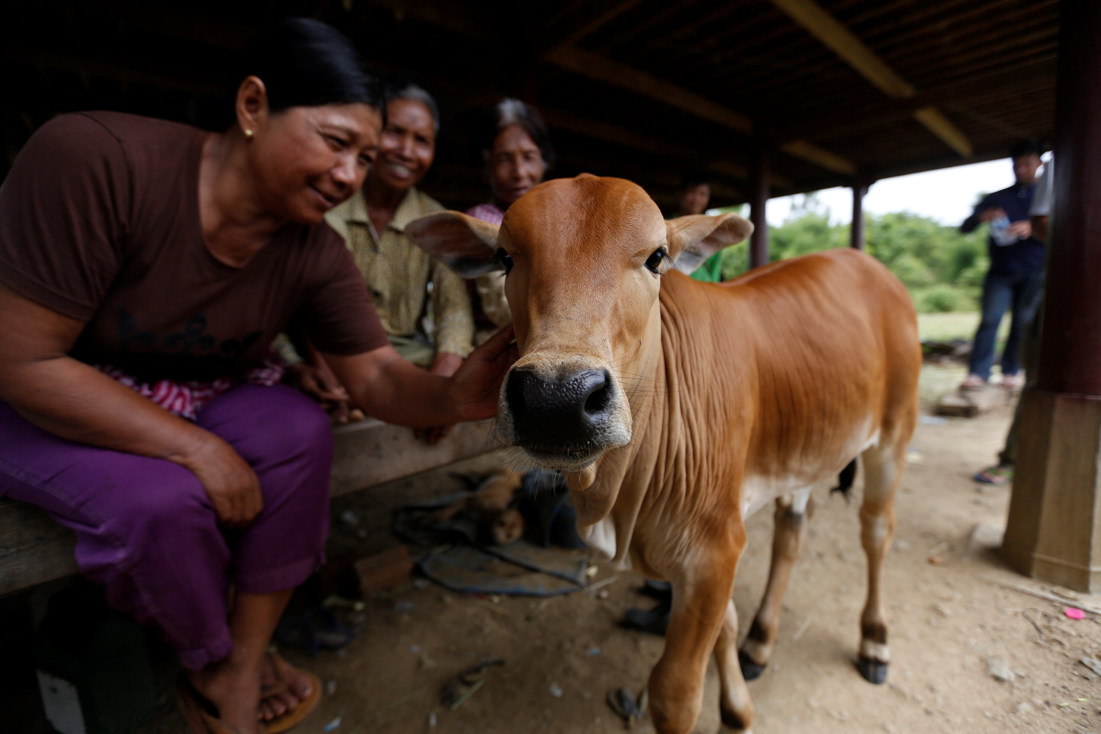 Relatives caress a cow in which they believe the family's patriarch was reborn in Kratie province, Cambodia, July 18, 2017. REUTERS/Samrang Pring
