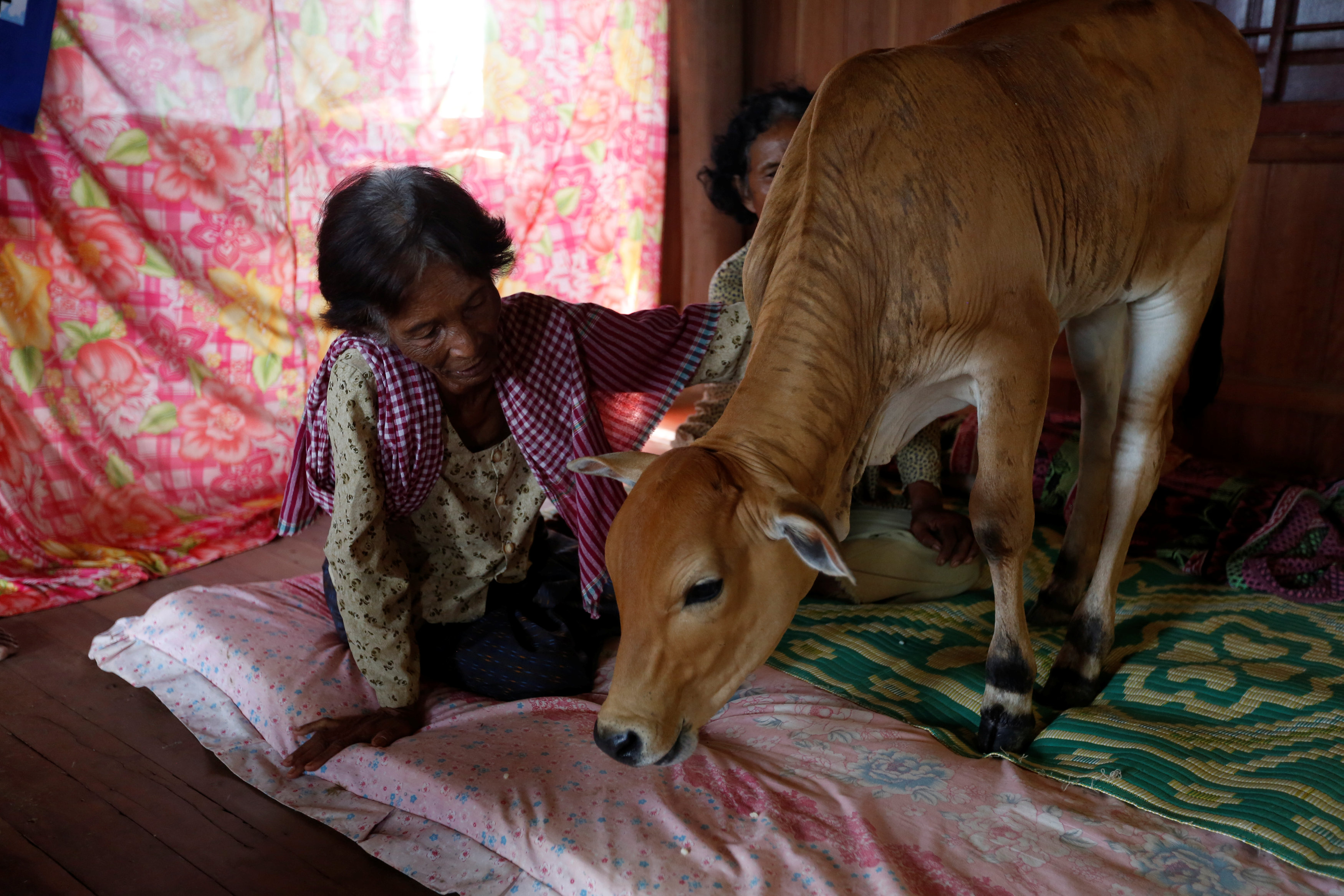 Khim Hang, 74, sits in her bedroom with a cow which she believes is her reborn husband in Kratie province, Cambodia, July 18, 2017. REUTERS/Samrang Pring