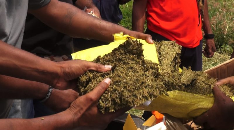 Police Destroy 40 Kilograms of Marijuana