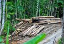 Indonesian walks 700-km backwards to highlight deforestation