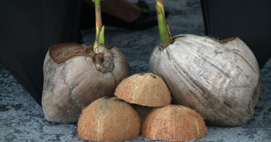 National Coconut Festival looks At Raising SMEs