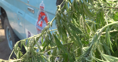 Police Uncover Marijuana Plot while in Pursuit of Stolen Vehicle